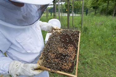 Consejos para iniciarse en la apicultura