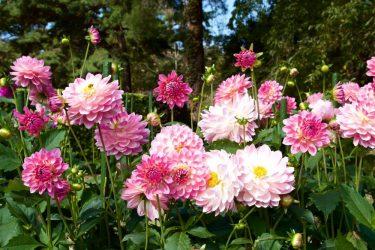 Qué flores cultivar con éxito en cada época del año