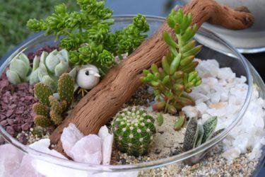 Cactus pequeño