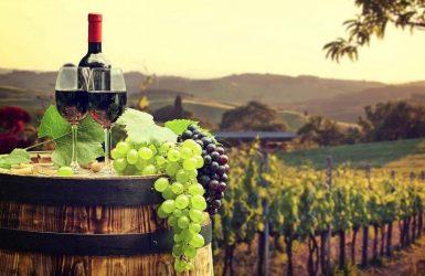 Guía para cultivar tu viñedo y hacer tu propio vino