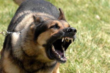 Ahuyentadores de perros
