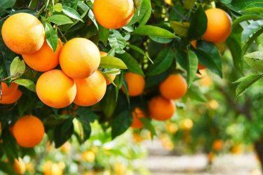 Temporada de naranjas en España: ¿cuándo es la época de naranjas?